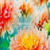 Global Underground: Select #5 2CD
